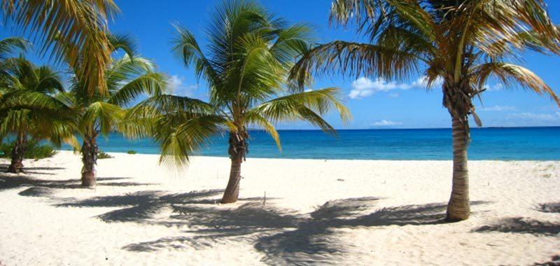 Oceana anguilla 36